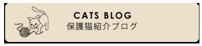 保護猫紹介ブログ