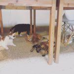 スタッフブログ 新入りネコさまのご紹介