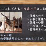 ~わたしにもできる一歩進んだネコ助け~ 動物愛護週間だもの何かしようぜぃ!
