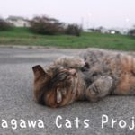 Tamagawa Cats Project