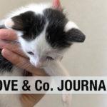 【LOVE & Co. JOURNAL】月ちゃん、ウシ君、ライオンの通院
