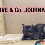 【LOVE&Co. JOURNAL】保護猫たちのハッピーニュース