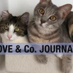 LOVE&Co. の保護猫たちと活動ブログ 「こしあん&つぶあんのきょうだい猫」
