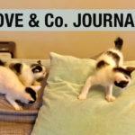【LOVE&Co. JOURNAL】新入り子猫のウシくん