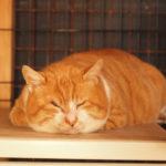 【里親募集中の保護猫ブログ】でかおちゃんへの愛がとまらない
