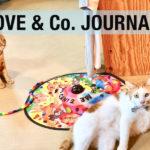 【 LOVE&Co. JOURNAL 】LOVE&Co.の保護猫たちと近況