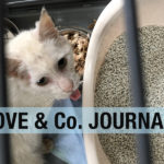 【LOVE&Co. JOURNAL】地域猫も大変なんです&保護できない理由
