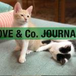 【LOVE&Co. JOURNAL】猫を保護したら