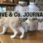 【LOVE&Co. JOURNAL】保護猫たちと最近のお仕事
