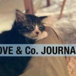 【LOVE&Co. JOURNAL】新入りちゃんいらっしゃい&新商品ぞくぞく