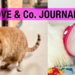 【LOVE&Co. JOURNAL】保護猫ロノちゃんの入院とホイップの皮膚炎