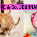 【LOVE&Co. JOURNAL】保護猫ロノちゃんの入院とホイップの皮膚炎