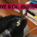 【LOVE&Co. JOURNAL】元保護猫の卒業生くーたんとのお別れ