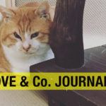【LOVE&Co. JOURNAL】祝!保護猫でかおちゃんトライアル決定