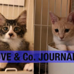【LOVE&Co. JOURNAL】保護猫でかおちゃんとポット&チャーリーのお届け