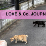 【LOVE&Co. JOURNAL】野良猫ちゃんの捕獲と保護