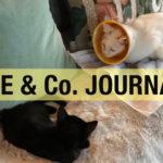 【LOVE & Co. JOURNAL】保護猫ブログ ホイップが退院しました
