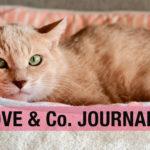 【LOVE & Co. JOURNAL】保護猫ブログ ハンサムくんのご帰還