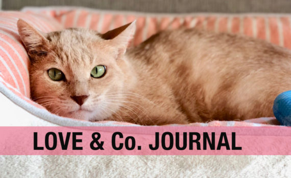 LOVE&Co.journal
