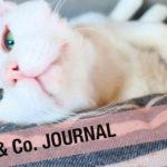 LOVE & Co. JOURNAL】保護猫お餅のお引越し