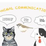 ウチの子からのメッセージが聞ける アニマルコミュニケーション セッション