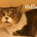 【LOVE & Co. JOURNAL】新しくやってきた保護猫、べにちゃん
